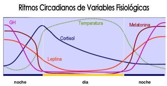 cronobiologa-y-obesidad-5-638