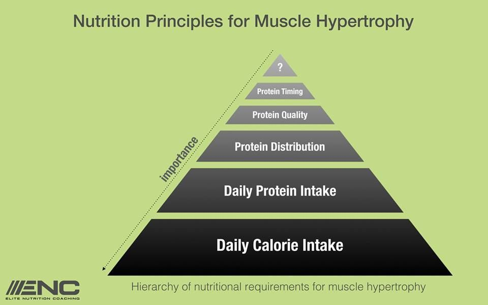Nutrition Hypertrohy Principle
